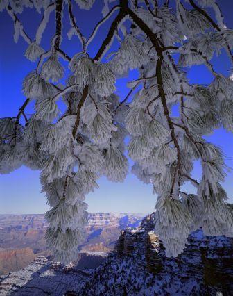 GCA 26-4 JDykinga Snowy Ponderosa_WebCompress
